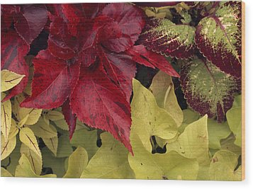 Coleus And Other Plants In A Window Box Wood Print by Paul Damien
