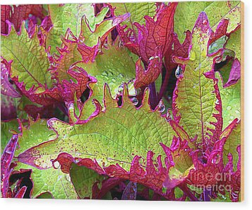 Coleus With Raindrops Wood Print by Judi Bagwell
