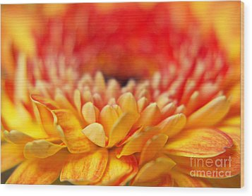 Color Of Summer II Wood Print by Angela Doelling AD DESIGN Photo and PhotoArt