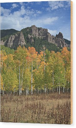 Colorado Aspens In Fall Wood Print by Drusilla Montemayor