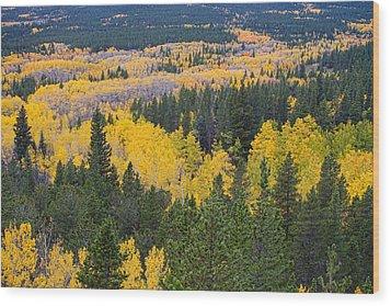 Colorado Autumn Aspens Boulder County  Wood Print by James BO  Insogna