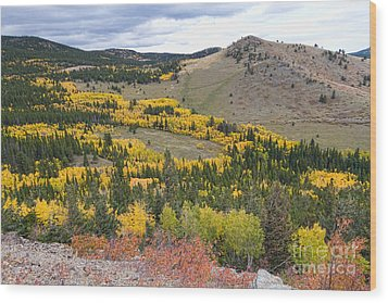 Colorado Autumn Aspens Colors Wood Print by James BO  Insogna