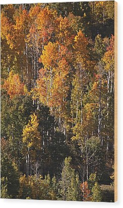 Colorado Flaming Aspen Wood Print by Drusilla Montemayor