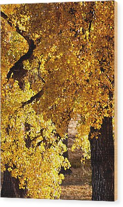 Colorado Gold Wood Print by Colleen Coccia