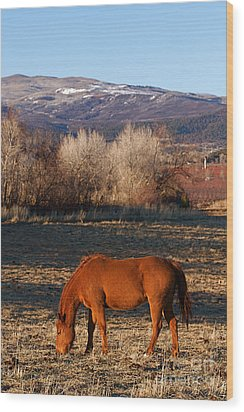 Colorado Horse Ranch At Sunset Near The Rocky Mountains Wood Print by ELITE IMAGE photography By Chad McDermott