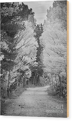 Colorado Rocky Mountain Aspen Road Portrait Bw Wood Print by James BO  Insogna
