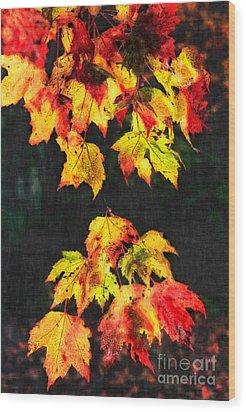 Colorful Autumn Leaves IIi Wood Print by Dan Carmichael
