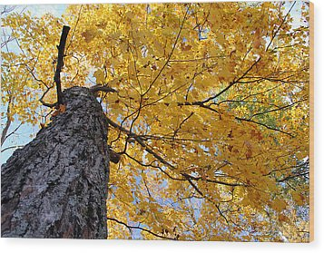 Colorful Canopy 130 Wood Print