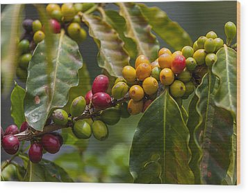 Colorful Coffee Beans Wood Print by Craig Lapsley