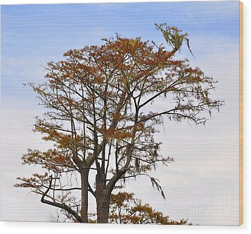 Colorful Cypress Wood Print by Al Powell Photography USA