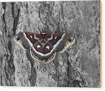 Colorful Moth Wood Print