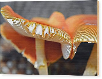 Colorful Mushrooms Wood Print by Susan Leggett