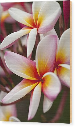 Colorful Plumeria Flowers  Wood Print by Anek Suwannaphoom