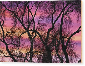 Colorful Silhouetted Trees 21 Wood Print by James BO  Insogna