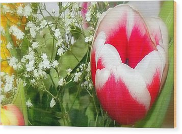 Colorful Tulip Wood Print by Jose Lopez