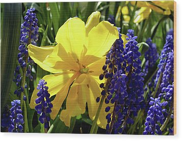 Wood Print featuring the photograph Colors Of Spring by Pravine Chester