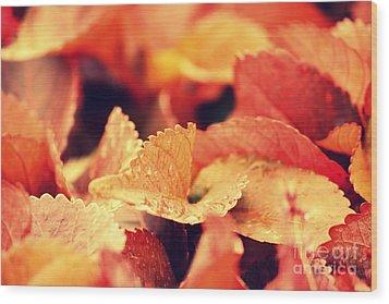 Colour Me Red Wood Print by Vishakha Bhagat