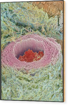 Coloured Sem Of Section Through A Human Arteriole Wood Print by Steve Gschmeissner