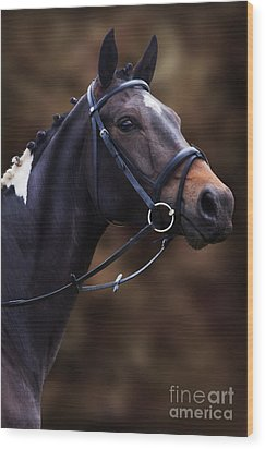 Coloured Show Horse Wood Print by Ethiriel  Photography
