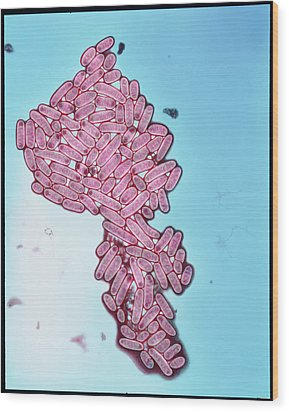 Coloured Tem Of Escherichia Coli Bacteria Wood Print by Eddy Gray