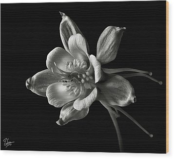 Wood Print featuring the photograph Columbine In Black And White by Endre Balogh