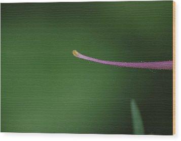 Columbine Spur Wood Print by Ken Dietz