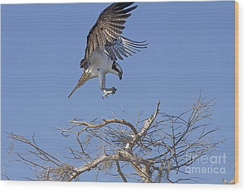 Coming In For A Landing Wood Print by Anne Rodkin