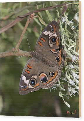 Common Buckeye Butterfly Din182 Wood Print