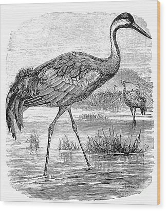 Common Crane Wood Print by Granger