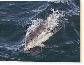 Common Dolphin Delphinus Delphis Wood Print by Rich Reid