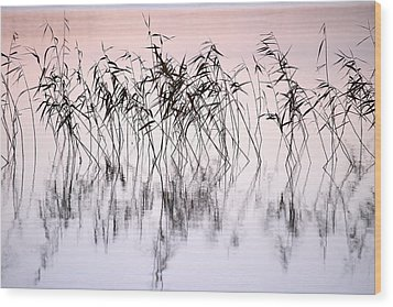 Common Reeds Wood Print