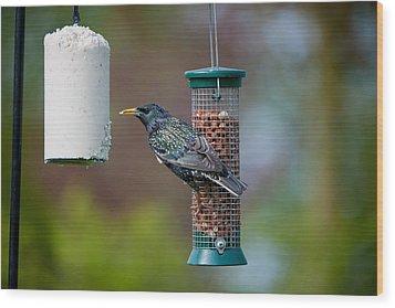 Common Starling Sturnus Vulgaris On Bird Feeder Wood Print by Mike Powles