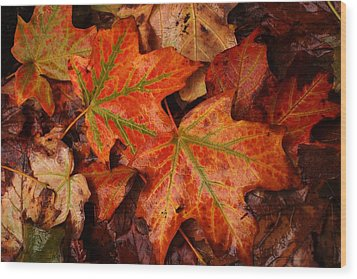 Complementary Contrast Leaves Wood Print by Matthew Green