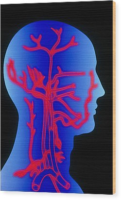 Computer Graphic Of Head & Neck, Showing Arteries Wood Print by Pasieka