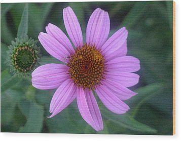 Cone Flower Wood Print by Linda Pope