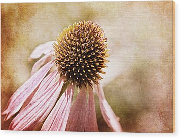 Cone Flower Wood Print by Margaret Hormann Bfa