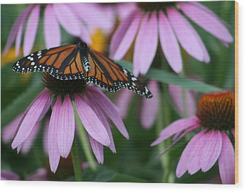 Wood Print featuring the photograph Cone Flowers And Monarch Butterfly by Kay Novy