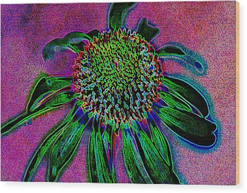 Coneflower Wood Print by Simone Hester