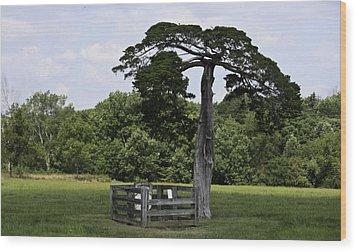 Confederate Grave Of Lafayette Meeks Appomattox Virginia Wood Print by Teresa Mucha