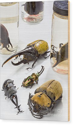 Confiscated Beetles Wood Print by Science Source