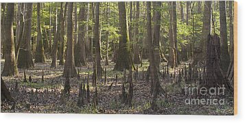 Congaree National Park  Wood Print by Dustin K Ryan