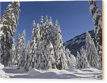 Coniferous Forest In Winter Wood Print by Konrad Wothe