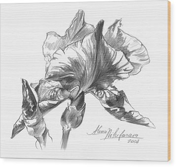 Conte Pencil Sketch Of Iris Wood Print