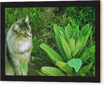 Wood Print featuring the photograph Contemplating The Nature Of Mullein by Susanne Still