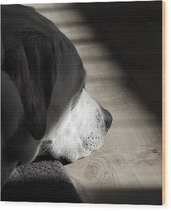 Contemplation Wood Print by Fiona Messenger
