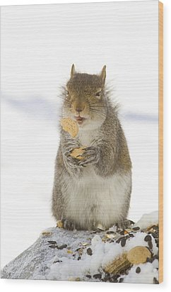 Cookie Squirrel Wood Print