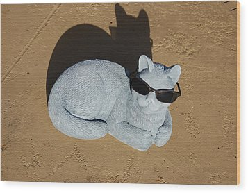 Wood Print featuring the photograph Cool Cat by Aimee L Maher Photography and Art Visit ALMGallerydotcom