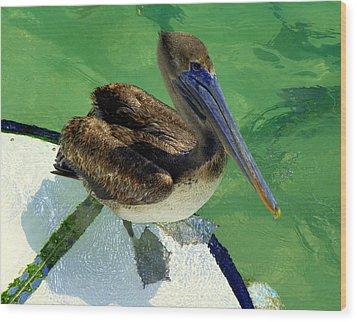 Cool Footed Pelican Wood Print by Karen Wiles