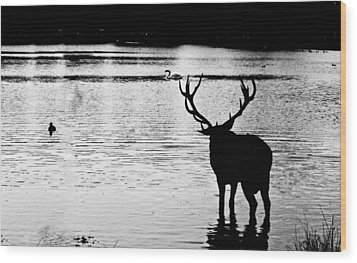 Wood Print featuring the photograph Cooling Off Deer by Maj Seda