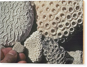 Coral Cobbles On Beach Of Bonaire Wood Print by Greg Dimijian